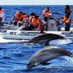 """Oceanic Club continua proiectul """"Delfini si oameni"""""""